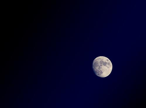 (164/365) Luna by albertopveiga