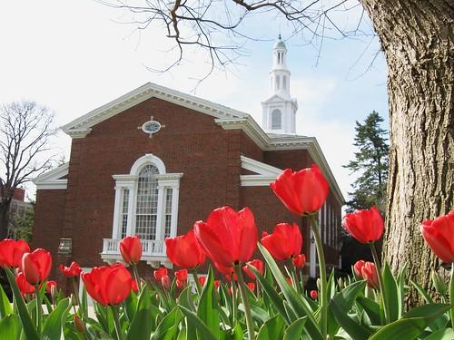 Memorial Hall Tulips