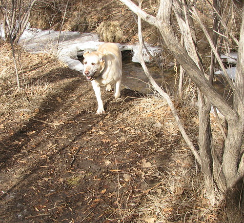Sadie runs
