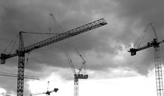 A skyful of cranes