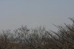 氷取沢市民の森の富士山(Mt. Fuji at Hitorizawa civic forest, Japan)