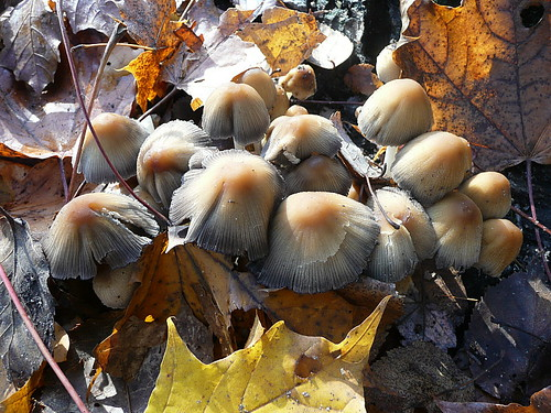 After the rain, the mushrooms