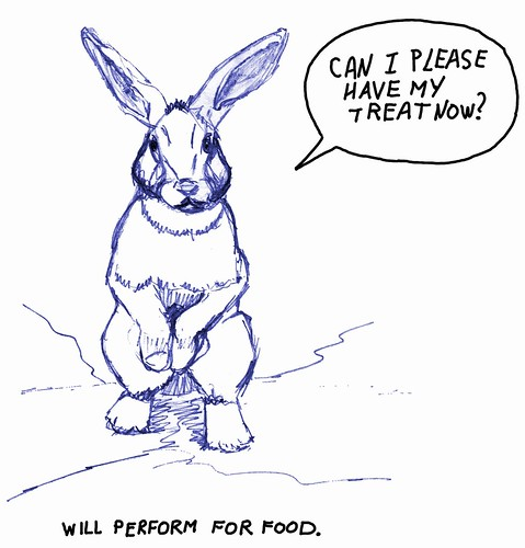 This rabbit will perform for food