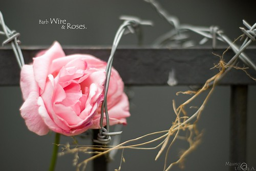 Barb Wire & Roses.