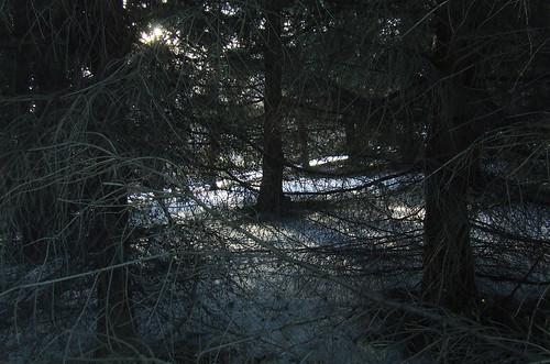 spruce grove 1
