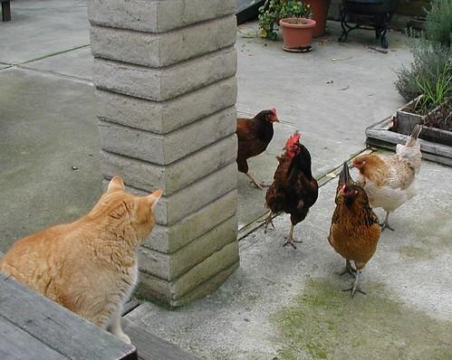Reuben & Chickens