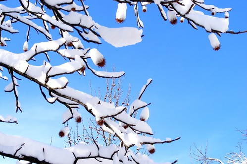 New York Winter Scene