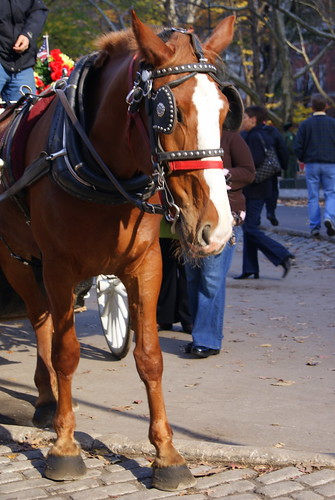 the beautiful horse that took us on our carriage ride :) he was so sweet!