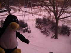 Tux feliç amb la nevada
