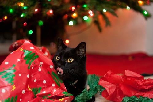 Christmas Catnip (9 of 11)