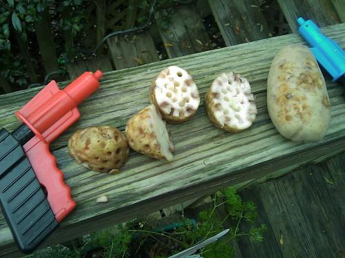 Potato Guns and Ammo