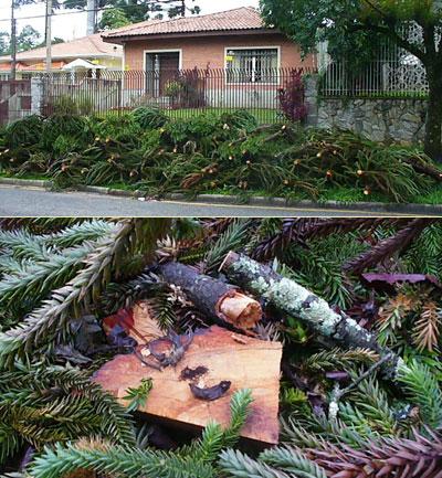 crime ambiental rua recife