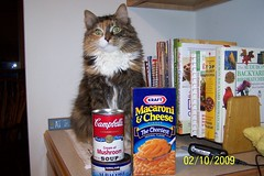 Cat takes care of the cooking