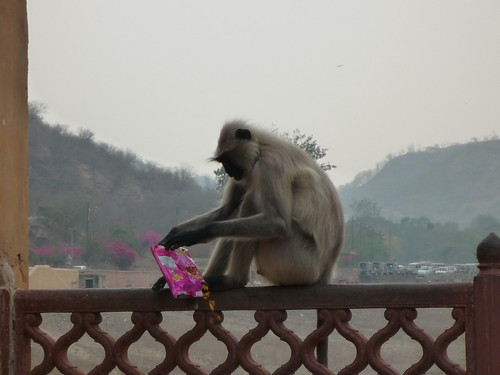 Affe mit erlegter Beute
