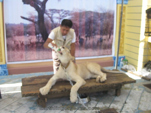 petting Zoori