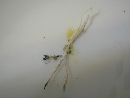 Burn test of fiber