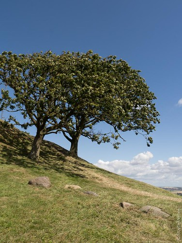 vejrhoj-twin-trees