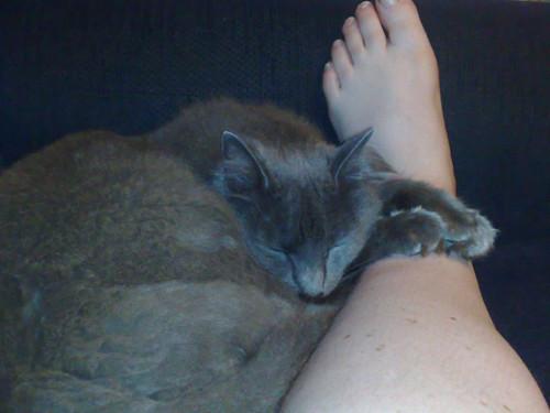 Possessive paws