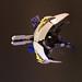 Crescent Mooner by Legohaulic