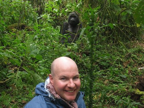 In the company of a silverback gorilla