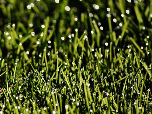 Dew It - 4/365