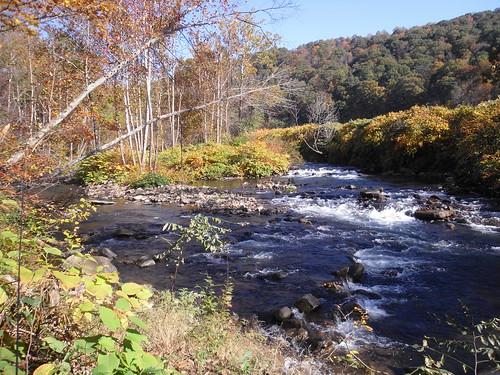 Savage River In Fall