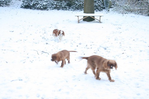 Dogs Winter 2009