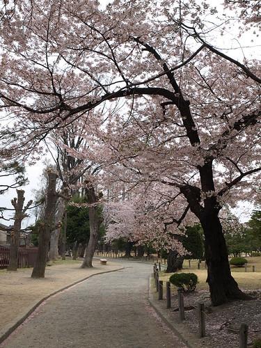 松本城步道
