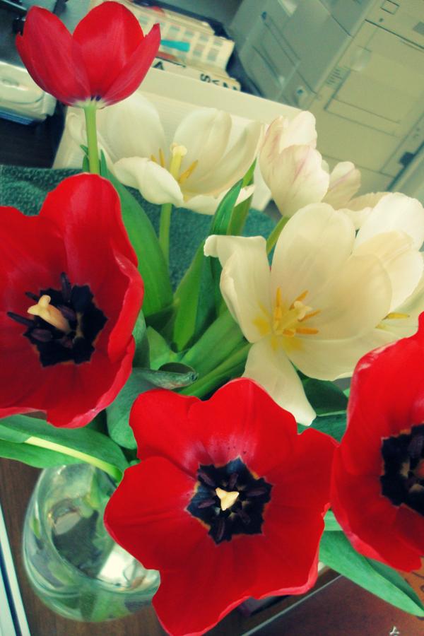 2-16 good morning, tulips