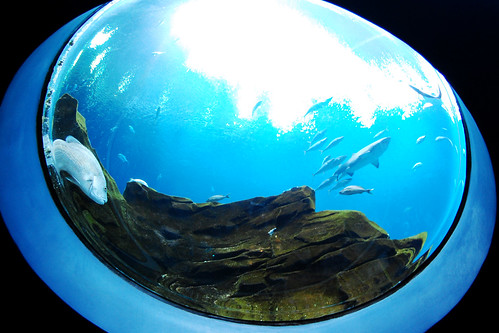 A fisheye view.