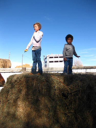 Top of the hay pile