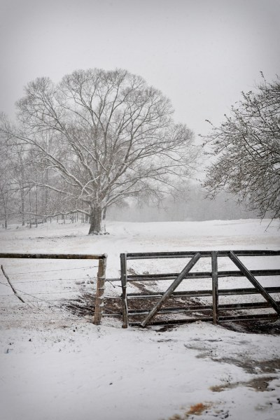 1002_Snow_005
