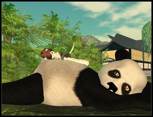 Giant cuddle panda!
