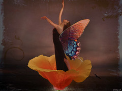 Butterfly Ballerina