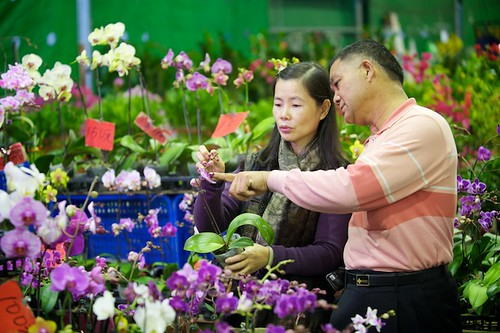 Orchids for sale at the taipei flower market