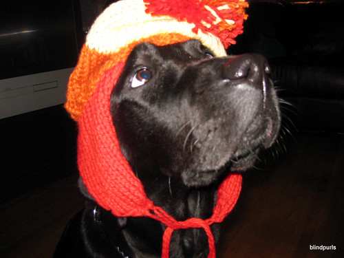 Black lab (Faye) wearing a Jayne Cobb (firefly) earflap hat in Orange, Red and Yellow with a big ass pompom