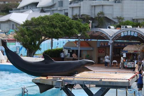 Posing Dolphin