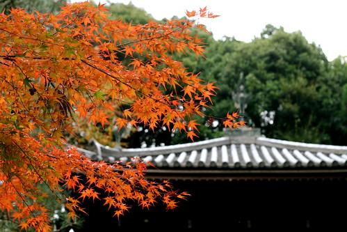 Striking Leaves