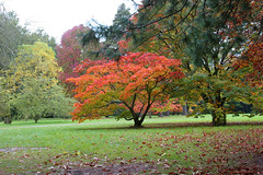 Autumn Colours (Fall Colors) - Orange and Red ...