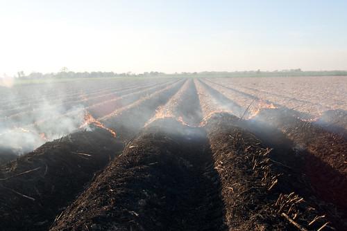 Burning Cane Field