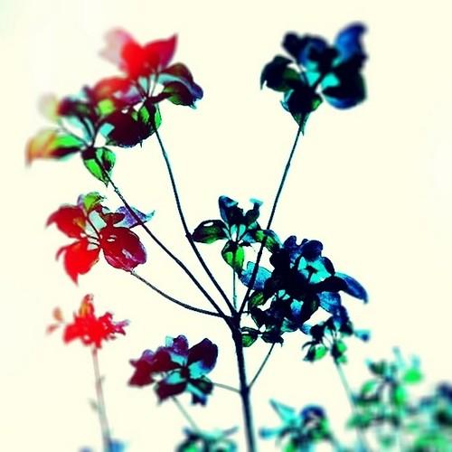 なんかスッキリしない空なので、気分を変えてどうぞ! #flower