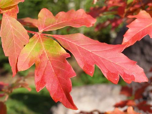 fall lens