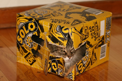 Solo Cat