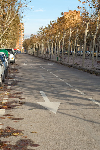 Flechas, árboles y asfalto