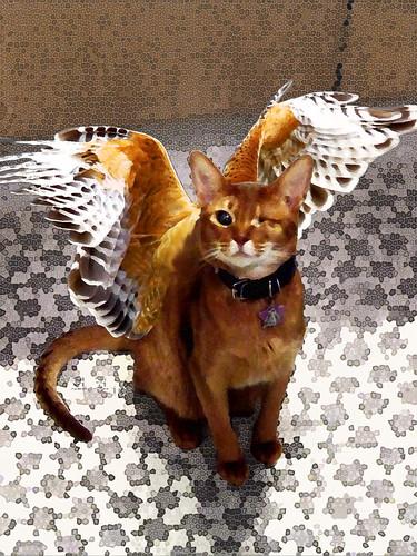 angelhawk