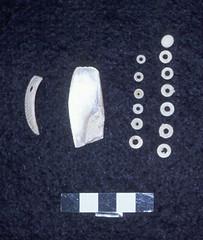 Conus Rings