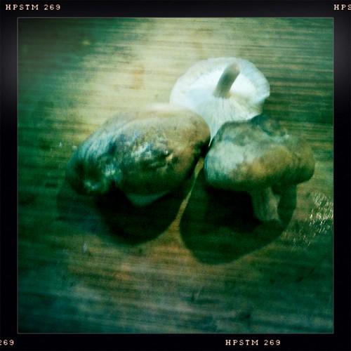 Shiitake mushrooms from FreshPicks.com