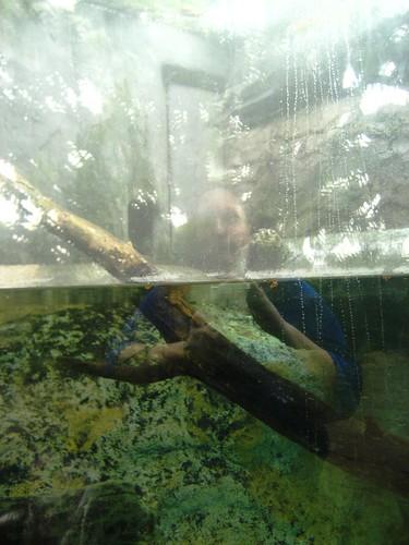 Self Portrait in Snake Tank