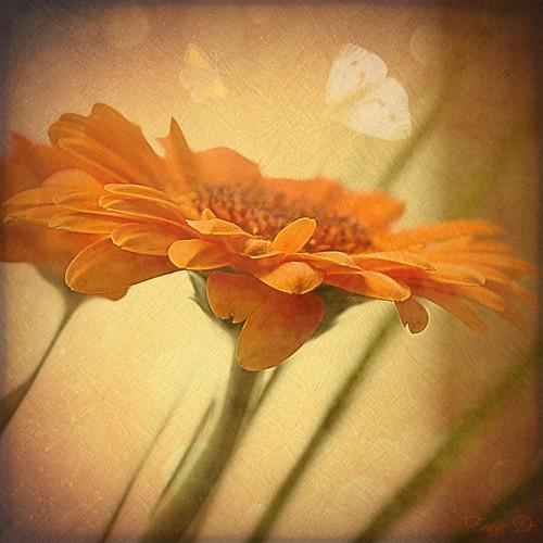 Träume in Orange