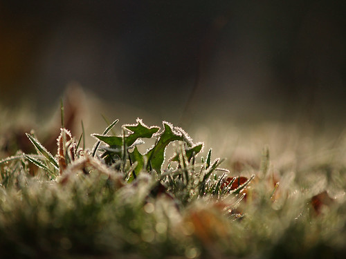 frosty bokeh